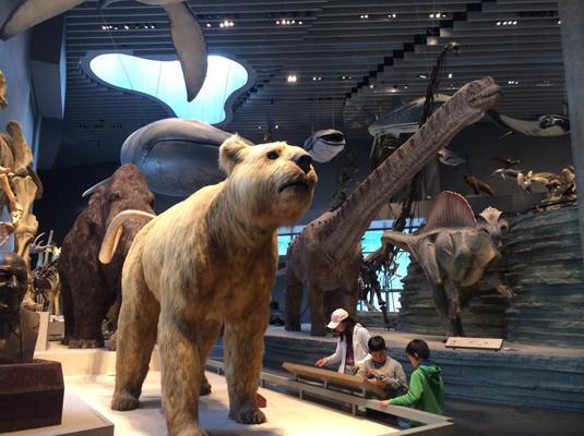 上海自然博物馆开馆