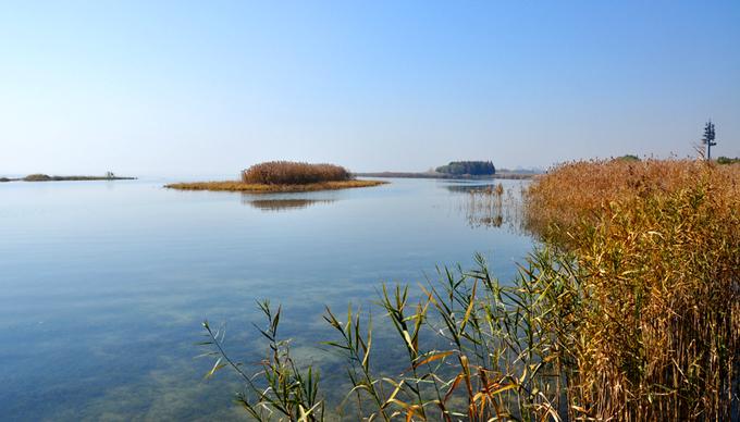 上海滨江森林公园位于浦东新区高桥镇高沙滩,于上世纪50年代采取吹泥